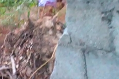 Indian sheila aunty peeing outdoor-3